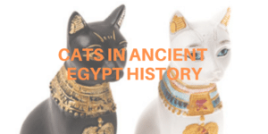 cats in ancient egypt history