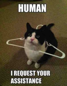 human-i-request-your-assistance-cat-meme