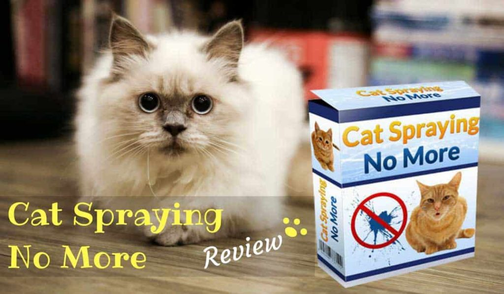 cat-spraying-no-more-review-14